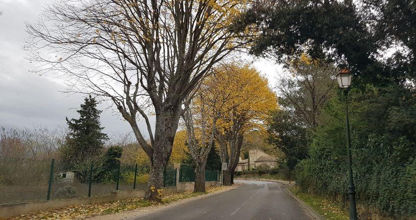פרובנס Provence